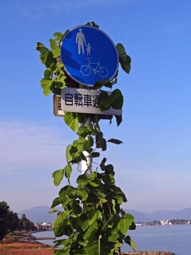 くさ・自転車・歩行者専用道