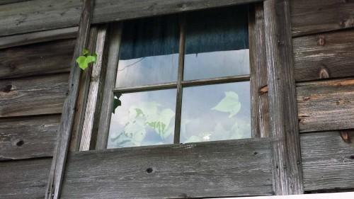 深窓の令嬢